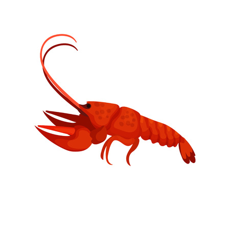 Boiled lobster on white background. Delicious seafood. Vector flat illustration.