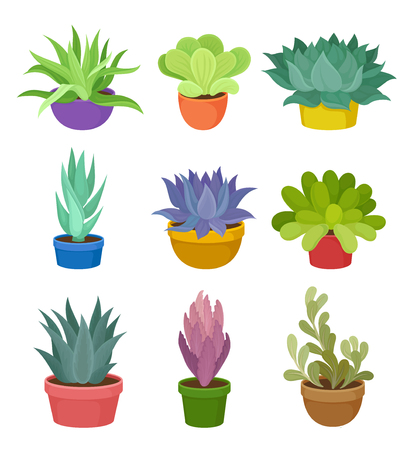 Collection of green house plants in colorful pots on white background. Succulent plant concept. Potted flower. Flora concept. Vector flat illustration. Illustration