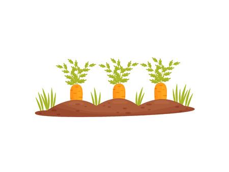 Cama de jardín de dibujos animados con zanahorias sobre un fondo blanco. Ilustración vectorial. Ilustración de vector