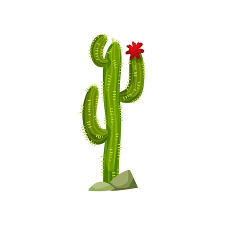 Cactus growing in stones. Pink flower. Vector illustration on white background. Vektorové ilustrace