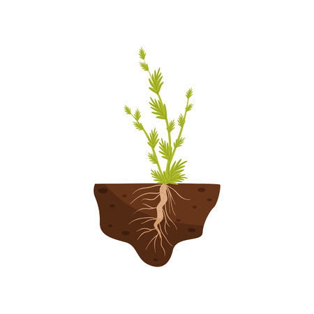 Plante con hojas pequeñas en un tallo alto y una raíz gruesa en el suelo. Ilustración de vector sobre fondo blanco.