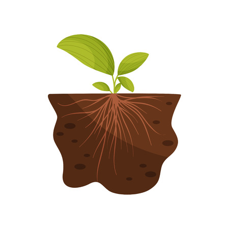 Lily of the valley leaves with thin roots in the soil. Vector illustration on a white background.