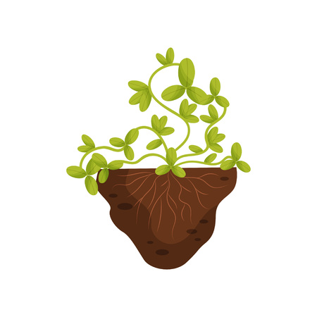 Plant with twining stems with roots in the soil. Vector illustration on white background. Ilustração