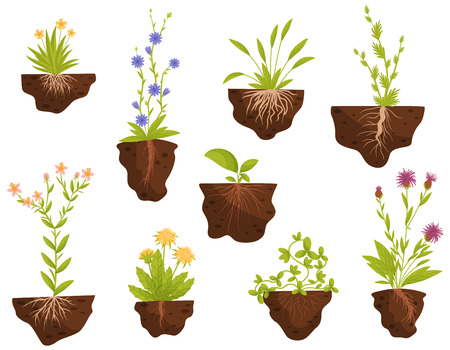 Set of blooming flowers with roots in the ground. Vector illustration on white background.