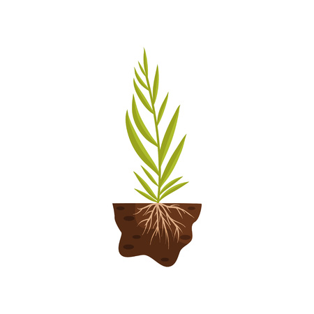 Plant with long thin leaves on a tall stalk. Roots in the soil. Vector illustration on white background.