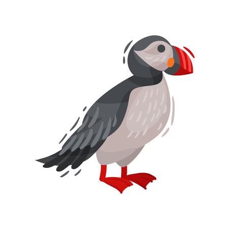Puffin bird image. Cartoon Icelandic puffin. Vector illustration. Banque d'images - 122014930