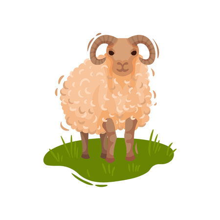 Curly beige ram stands on a green meadow. Vector illustration on white background.