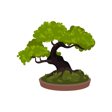 Bonsai tree in a pot. Vector illustration on white background.