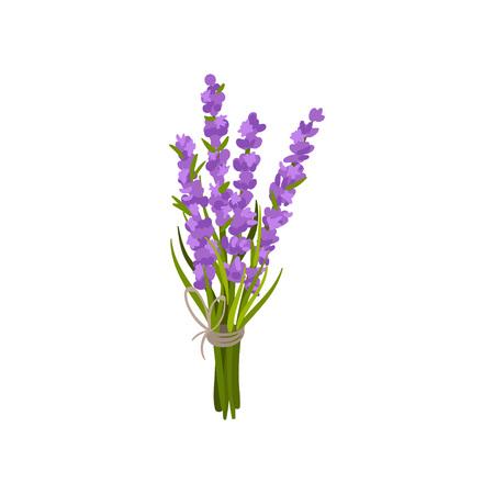 Purple flowers tied with a ribbon. Vector illustration on white background. Ilustração Vetorial