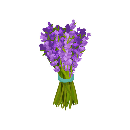 Bouquet of purple flowers tied a blue ribbon. Vector illustration on white background. Vectores