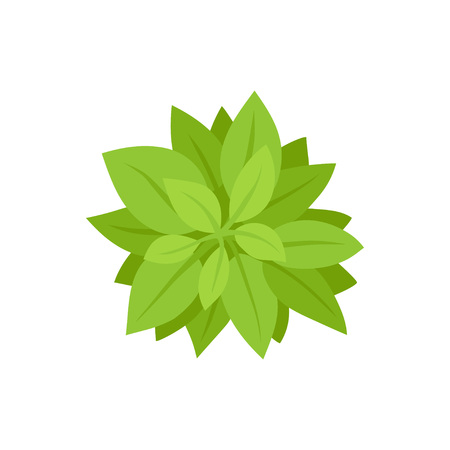 Green bush. View from above. Vector illustration. Stock Illustratie