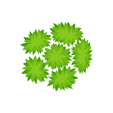 Six bushes. View from above. Vector illustration.