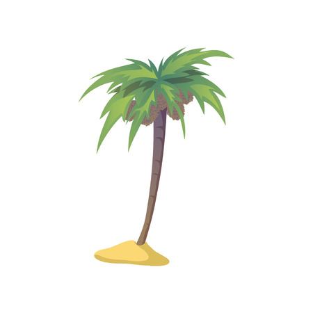 Coconut palm tree with nuts. Vector illustration on white background.