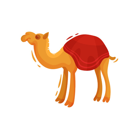 One-humped camel in a cape. Vector illustration on white background. Illustration