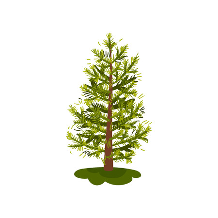 Lush little fir with young needles. Vector illustration on white background.