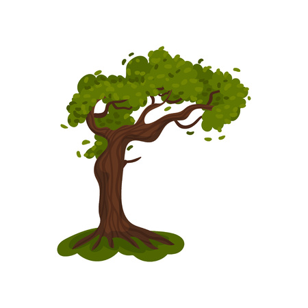 Tall tree with a lush crown. Vector illustration on white background.  イラスト・ベクター素材