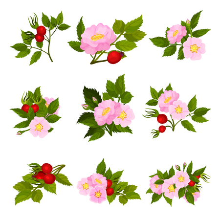 Set of images of red fruits and pink flowers of wild rose. Vector illustration on white background.