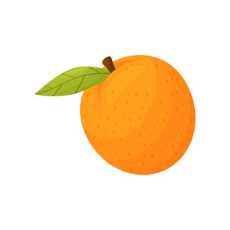 Whole orange closeup. Vector illustration on white background.