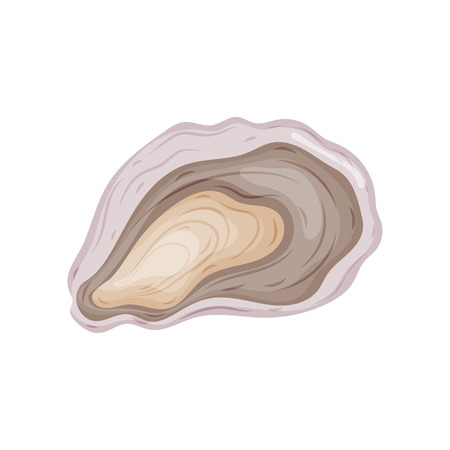 Open oyster shell. Vector illustration on white background.