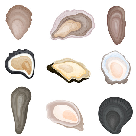 Set of images of fresh oysters in shells. Vector illustration on white background.