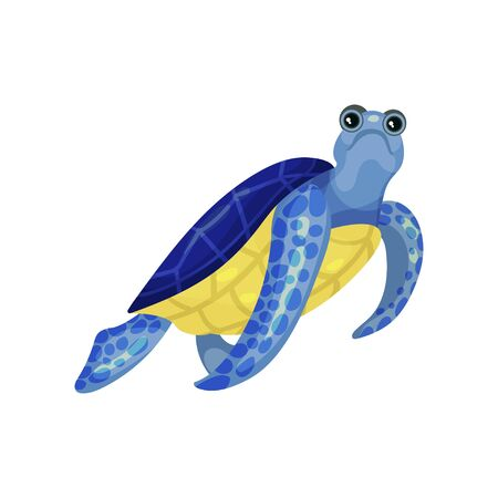 Blue turtle with a yellow belly. Vector illustration on white background.