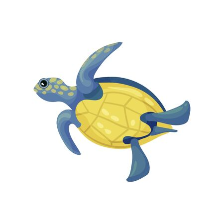 Blue turtle with a yellow belly and spots. Vector illustration on white background.