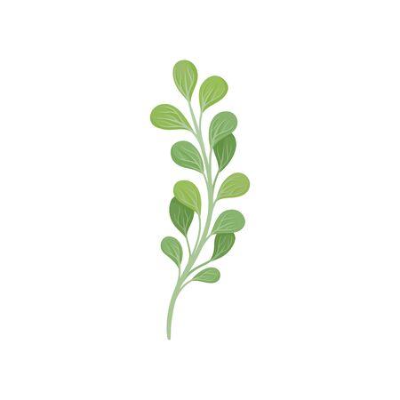 Tallo curvo con hojas. Ilustración vectorial sobre fondo blanco.