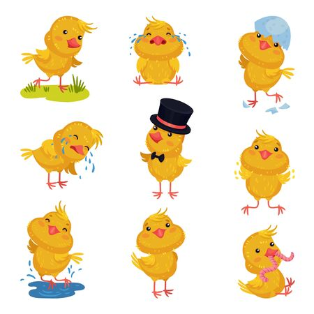 Set of images of little chickens. Vector illustration on white background.