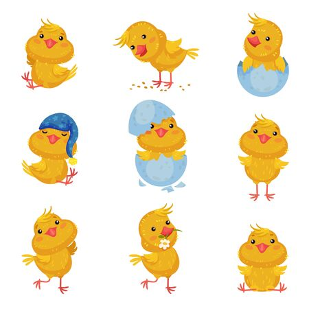Conjunto de imágenes de lindos pollos en diferentes situaciones y con diferentes objetos. Ilustración vectorial sobre fondo blanco.