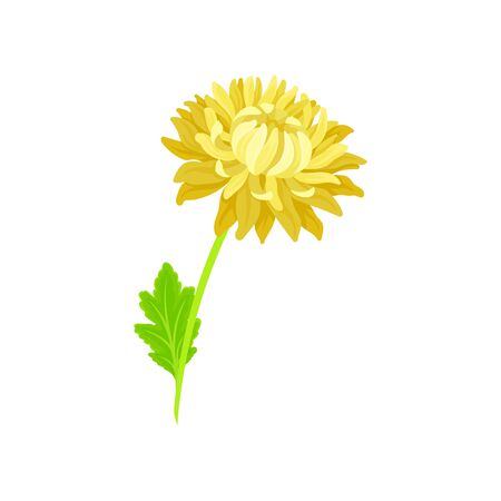 Yellow lush blooming flower on the stem with a leaf. Vector illustration on white background. Vektorgrafik