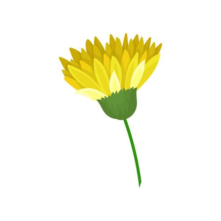 Thin stalk with a blooming yellow flower in green receptacle. Vector illustration on white background.