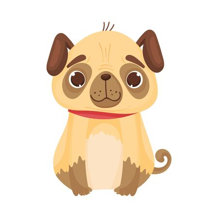 Contented pug sits in a red collar. Front view. Vector illustration on white background.