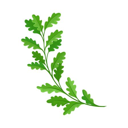 Branch of oak. Vector illustration on white background. Stock Illustratie