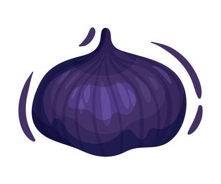 Whole ripe dark purple figs. Vector illustration on white background.