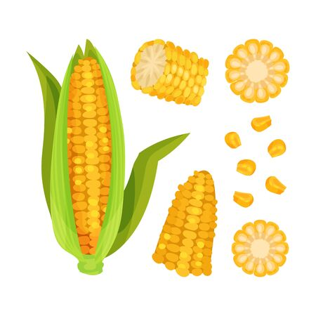 Set of corn. Whole cob with leaves, half, circles, grains. Vector illustration on white background.