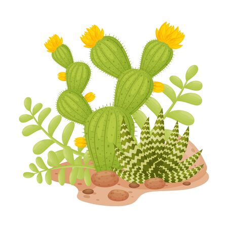 Tall cactus with yellow flowers next to striped aloe. Vector illustration on a white background.