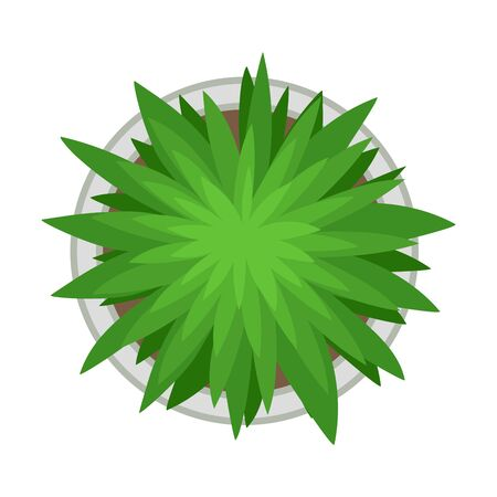 Lush plant in the flowerbed. Vector illustration on a white background. Illusztráció