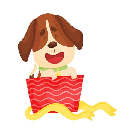 Cute beagle peeks out of a red box. Vector illustration on a white background.