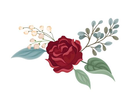 Dark red rose next to beige buds of small flowers. Vector illustration on a white background.