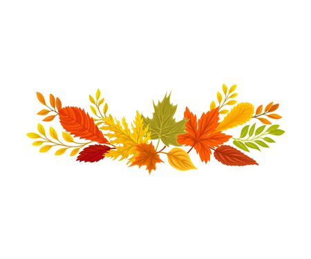 Composition of autumn leaves of ash, oak, maple. Vector illustration on a white background.