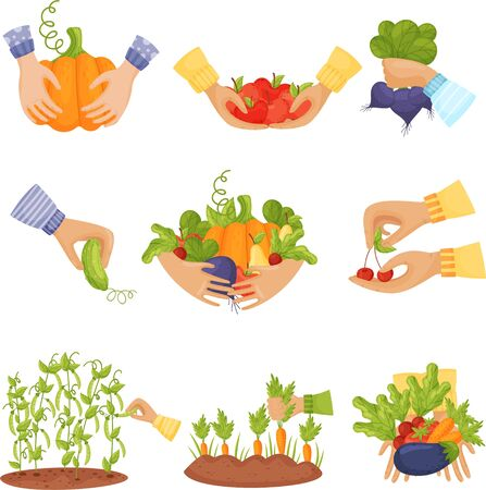 Set of different vegetables and fruits in the hands and in the beds. Vector illustration on a white background.