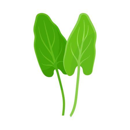 Sorrel leaves. Vector illustration on a white background. 版權商用圖片 - 130481326