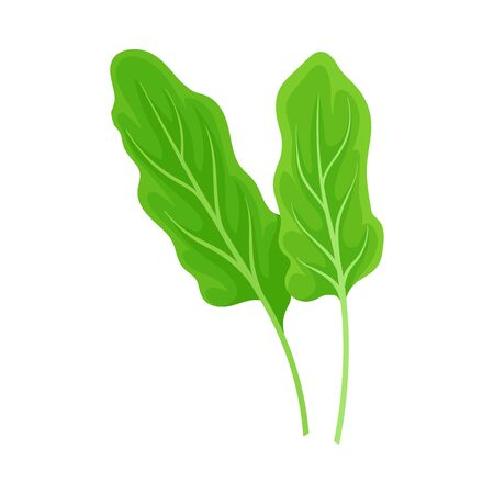Fresh leaves of sorrel. Vector illustration on a white background. 版權商用圖片 - 130481345