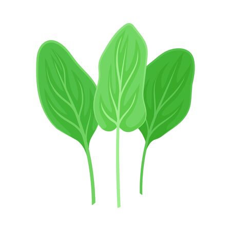 Three leaves of sorrel. Vector illustration on a white background.