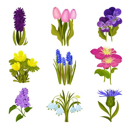 Set of images of spring flowers. Tulip, hyacinth, lilac, cornflower. Vector illustration on a white background.