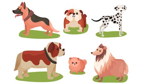 Vector Illustration Set Of Dogs Breed Isolated On White Background