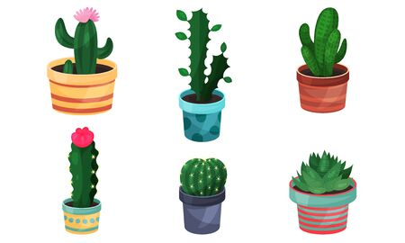 Some Cacti And Succulents Varieties Plants Vector Illustration Set