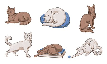 Adult white and brown cats. Vector illustration.
