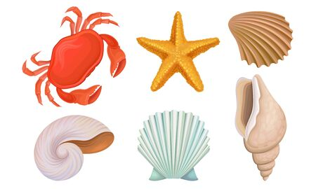 Different kinds of bright topical shells and corals. Underwater life objects. Vector illustration set, isolated on white background. Illustration