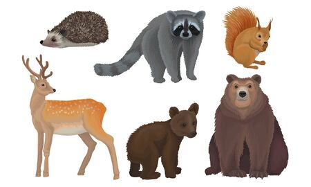 Wild Forest Habitants Drawn In Realistic Manner Vector Illustrations. Isolated On White Background Animal Set